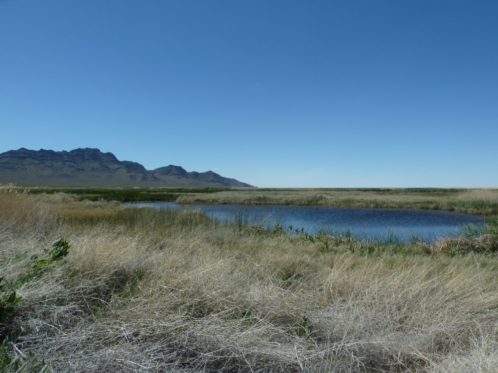 Fish Springs National Wildlife Refuge (1/3)